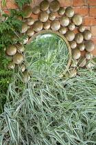 Mirror on wall, Phalaris arundinacea var. picta