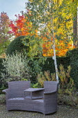 Outdoor Rattan chair on gravel terrace, clipped yew hedge, Betula utilis var. jacquemontii 'Grayswood Ghost', euonymus