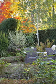 Outdoor Rattan chair on gravel terrace, Rosa 'Lichfield Angel', clipped yew hedge, Betula utilis var. jacquemontii 'Grayswood Ghost', euonymus