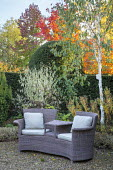 Outdoor Rattan chair with cushions on gravel terrace, clipped yew hedge, Betula utilis var. jacquemontii 'Grayswood Ghost', euonymus