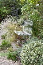 White metal bench, Jarava ichu, clipped euonymus ball