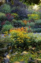 Hot borders at Bosvigo House, crocosmia, rudbeckia, dahlia