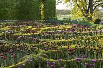 View across tulip parterre
