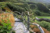 Steps in coastal garden, driftwood timber fence, Nicotiana sylvestris