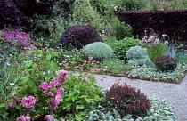 Grey and pink border, berberis, roses, stachys, geraniums, pittosporum, astrantia