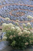 'Snail' spiral mosaic and Daucus carota in paving cracks