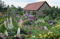 Delphiniums, alliums, geraniums, irises, sisyrinchiums and poppies in gravel garden