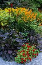Hot border with crocosmia, nasturtium, rudbeckia and Plantago major 'Rubrifolia'
