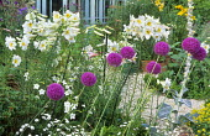Lilium regale, Allium giganteum, nicotiana