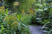 Slate chippings path, bamboo, Fatsia japonica, euphorbia