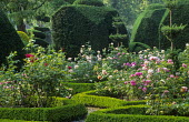 Roses in box-edged parterre, yew topiary