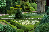 Topiary garden, box-edged parterre with pansies