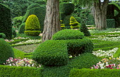 Topiary garden, pansies in box-edged parterre