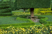 Topiary garden, bench around tree, box-edged parterre