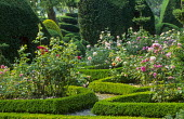 Roses in box parterre