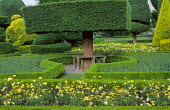 Topiary garden, bench around tree, anthemis bedding