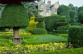 Topiary garden, view to house, yellow anthemis, bench around tree