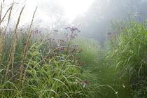 Eupatorium maculatum (Atropurpureum Group) 'Riesenschirm', Persicaria amplexicaulis 'Fat Domino', grass path