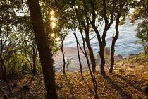 View through holm oak trees to seashore at dawn