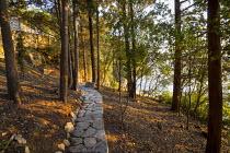 Stone path through holm oak woodland at dawn