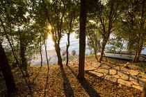 View through oak trees, Quercus ilex, to seashore at dawn