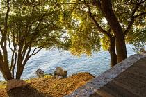 View through oak trees, Quercus ilex, to seashore
