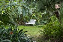 White bench in exotic garden clearing, Musa basjoo, chamaerops, washingtonia