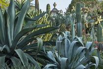 Agave americana, Agave weberi, Myrtillocactus geometrizans, Pachycereus pringlei