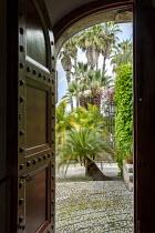 View from inside through doorway to mediterranean terrace outside, Macrozamia moorei, Washingtonia filifera