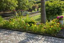 Nasturtiums by path laid to resemble Persian carpet; pelargoniums in ceramic pots