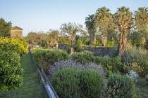 Rill irrigation system, lavender, Salvia officinalis, rosemary, grapefruit orchard, Washingtonia filifera