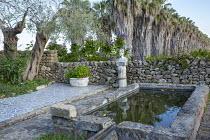 Raised irrigation pool, stone wall. olive tree, ceramic tile paving, Washingtonia filifera avenue extending into citrus groves