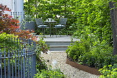 Gravel path leading to table and chairs on raised patio in shady front garden, Acer palmatum 'Bloodgood', Cor-Ten steel border edging, hornbeam hedge, metal railings