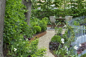 Raised beds edged with Cor-Ten steel, curving gravel path leading to wooden table and chairs on patio, hornbeam hedge, metal railings, Tulipa 'Queen of Night' and 'White Triumphator', Heuchera 'Plum P...