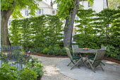 Wooden table and chairs on circular stone patio in London front garden, hornbeam hedge