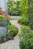 Curving gravel path leading to table and chairs on raised patio in shady front garden, Cor-Ten steel border edging, hornbeam hedge, box ball, Heuchera 'Plum Pudding', Euphorbia amygdaloides var. robbi...