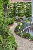 Raised beds edged with Cor-Ten steel, curving gravel path leading to wooden table and chairs on patio, hornbeam hedge, metal railings, Alchemilla mollis, box balls, Dryopteris affinis 'Cristata The Ki...