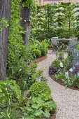 Raised beds edged with Cor-Ten steel, curving gravel path leading to wooden table and chairs on patio, hornbeam hedge, Alchemilla mollis, Luzula nivea, Dryopteris affinis 'Cristata The King', Aquilegi...