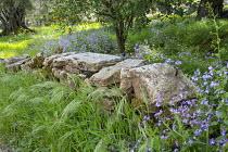 Dry-stone wall, Lunaria annua