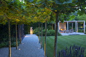 Pleached London plane tree arbour over gravel path, view across lawn to timber pavilion