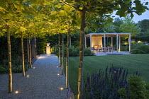 Pleached London plane tree arbour over gravel path, view across lawn to timber pavilion, Salvia nemorosa 'Caradonna'