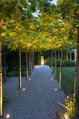 Uplit pleached London plane tree arbour over gravel path, view to lit urn on plinth