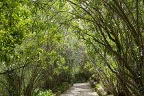 Path through shady avenue