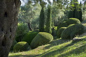 Clipped mounds of Pistacia lentiscus, olive trees, Cupressus sempervirens