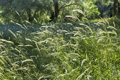 Grasses in meadow