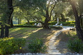 Stepping stone path through olive tree grove