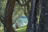 Framed view towards large terracotta olive jar in olive tree grove