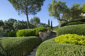 Path through cloud-pruned native shrubs, olive trees, steps