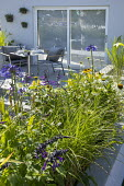 Agapanthus 'Navy Blue', Echinacea 'White Swan', Salvia 'Amistad', table and chairs on patio by house
