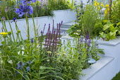 Raised beds with sawn sandstone coping, Salvia 'Caradonna', Agapanthus 'Navy Blue', Echinacea 'White Swan'
